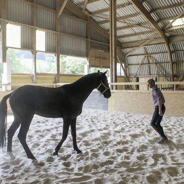Yohan cheval liberté.jpg