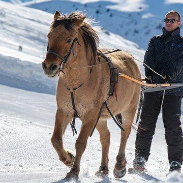 Initiation au Ski Joëring