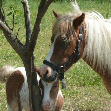 Ma première initiation au poney