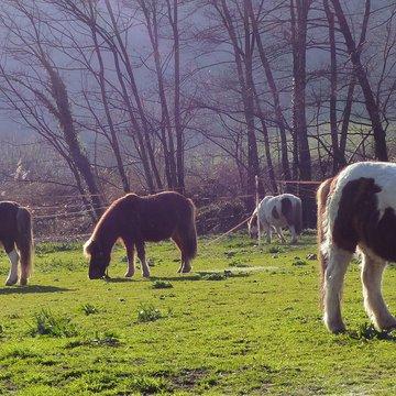 Le poney compagnon