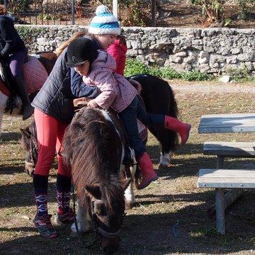 Des baby ponies pour des petits cavaliers