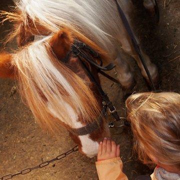 Equitation adaptée avec Christine