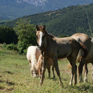 Espace Equestre du Trièves