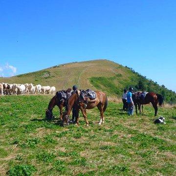 Balade à cheval plaisir au cœur du Trièves